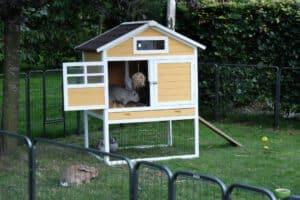 konijnenhok in zweeds geel geverfd